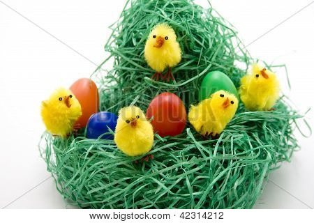 Chicks with Eastereggs in Easter nest