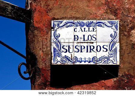 Plant And A Wall In Calle De Los Suspiros