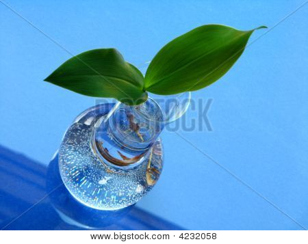 Lily Of The Valley - Leaves Over Blue Background