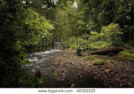 Sabah Wilderness