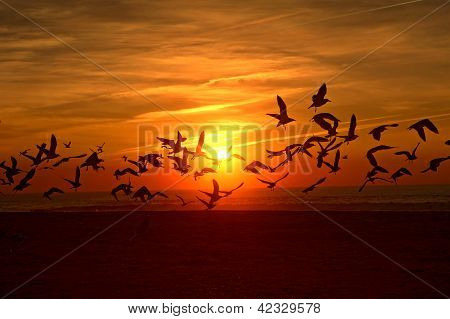 Birds flying into the sunset