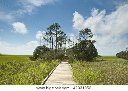 Salt Marsh Walk