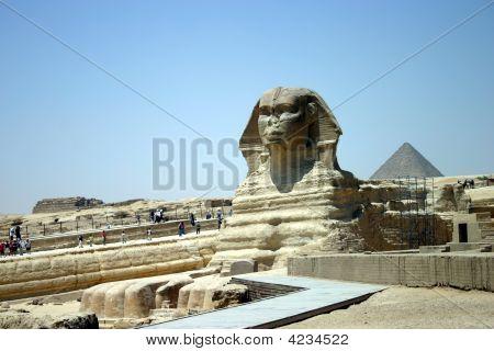 Sphinx Portrait