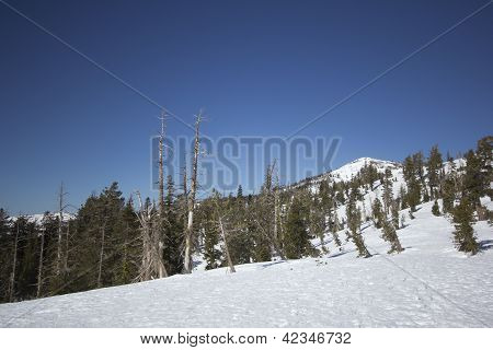Sierra Nevada snow ranges