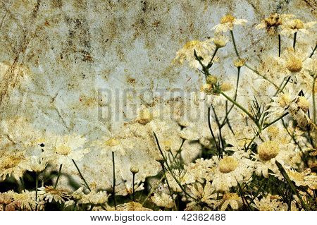 Grunge Image Of Daisies On A Background Of The Sky