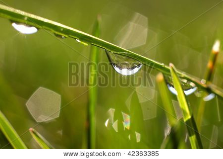Close up shot of water drops on a blade of grass