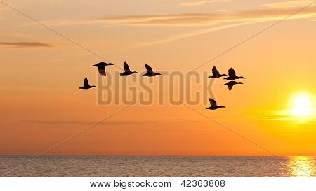 Birds Flying In The Sky At Sunset