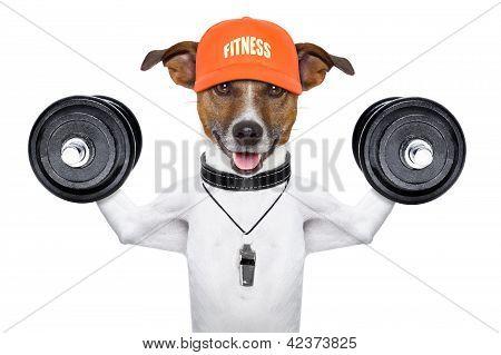 Cão de fitness