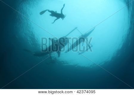Underwater shoot of a gigantic whale shark gliding in a depth and snorkeler on a surface