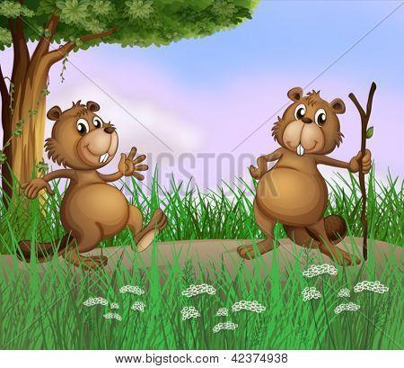 Abbildung der zwei Biber spielen im Wald
