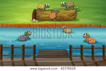 Illustration of a group of turtles at the river
