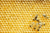 bees work on honeycomb. Honey cells pattern.