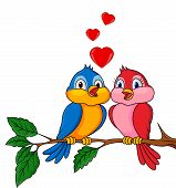 Bird couple in love