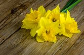stock photo of jonquils  - Detail of yellow jonquil flowers on wooden background - JPG
