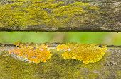 Lichen On Fence