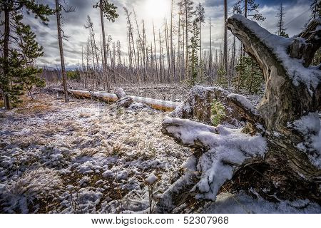 September Snow In Yellowstone