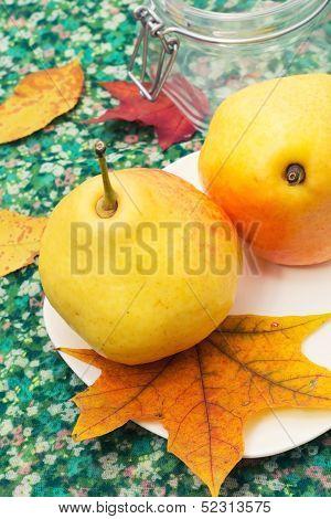Pear autumn harvest