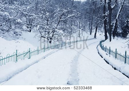 Fluffy Snow On Trees And Pathway