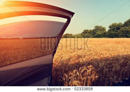 Car In Wheat Field With Opened Door