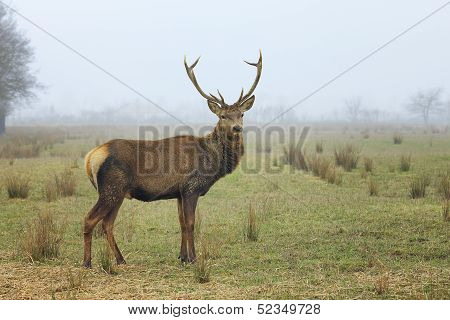 View Of Red Deer