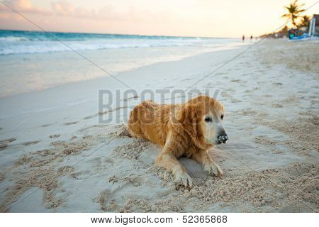 Beautiful Dog On The Beach