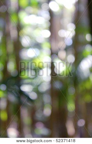 Soft focus Rain forest background 2