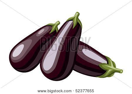 Eggplants. Vector illustration.