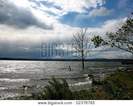 Lake, Tree And Bank