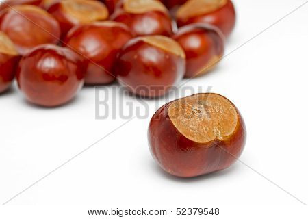 Ripe Conkers on a white background