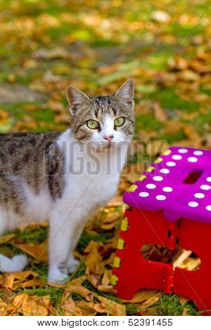 Cat And Colorful Stool In Autumn Park