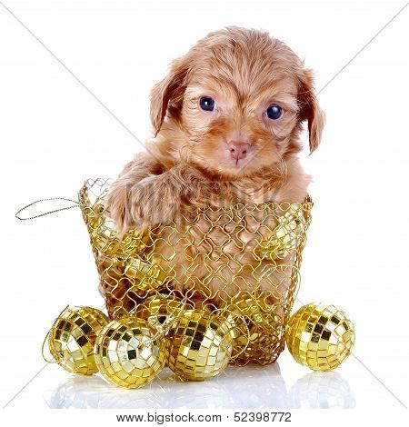 Puppy In A Wattled Basket With New Year's Balls.