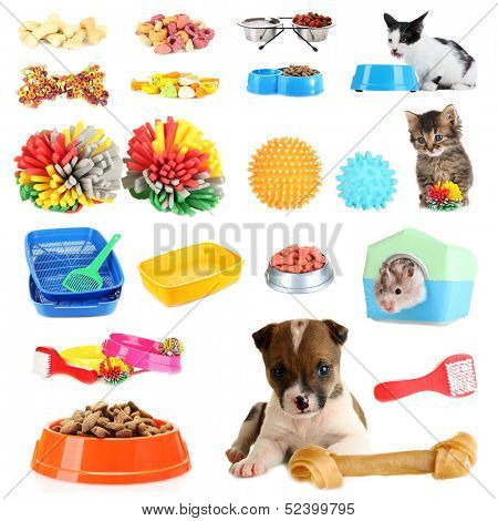 Collage of pets and different stuff for them
