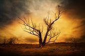 stock photo of dry grass  - dry tree in field and crows on the branches - JPG