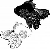 image of koi tattoo  - goldfish carp cartoon isolated oriental aquarium painting - JPG