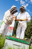 image of bee keeping  - Male and female beekeepers in protective clothing inspecting honeycomb frame at apiary - JPG