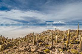 picture of peyote  - View of Incahuasi island Salar de Uyuni Bolivia - JPG