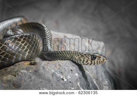 Snake In Low Key