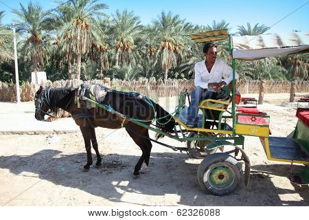 Carriage In Oasis