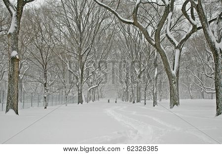 Central Park in the snow, Manhattan
