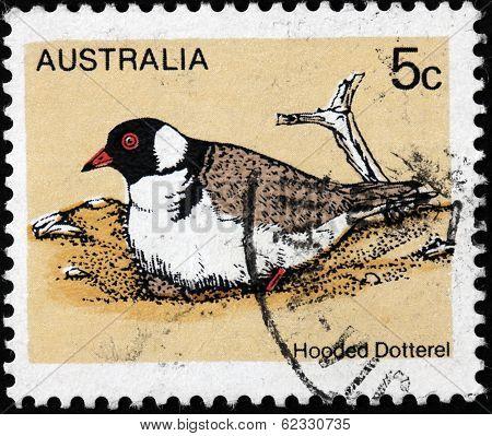 Hooded Dotterel Stamp