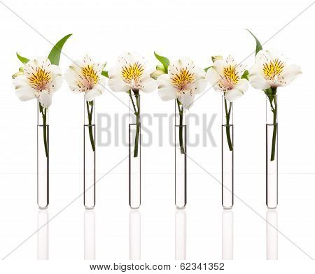 Line Of Test-tubes With Flowers