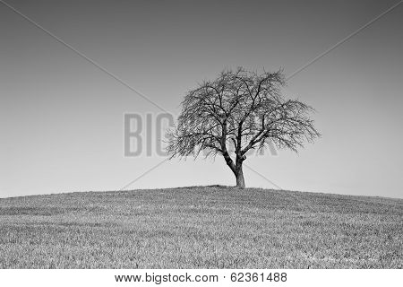 Single Black And White Tree