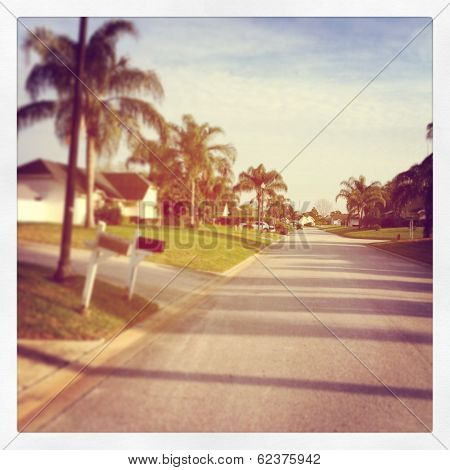 Street view with trees and road - instagram effect