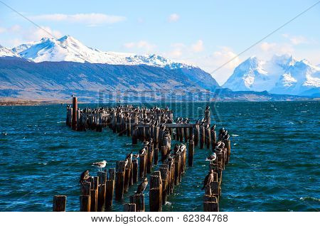 King Cormorant Colony, Old Dock, Puerto Natales, Chile