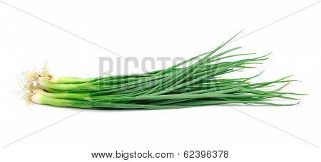 Spring Onions On A White Background.