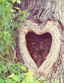 picture of cutting trees  - a tree with a knothole shaped like a heart done with a soft filter - JPG