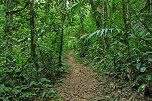 stock photo of biodiversity  - The Lush Tropical Jungle in Costa Rica - JPG