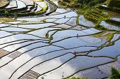 stock photo of ifugao  - The world heritage Rice terraces in Batad northern Luzon Infugao province Philippines - JPG