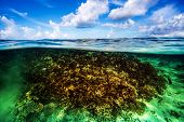 Beautiful coral garden underwater, diving on Maldives, blue cloudy sky, turquoise water, luxury summ