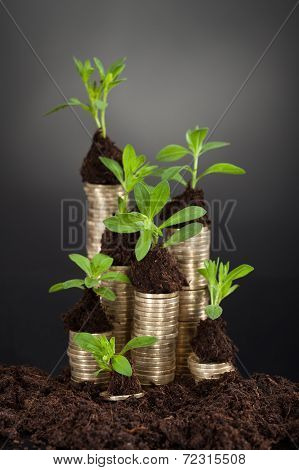 Saplings On Stack Of Coins At Desk